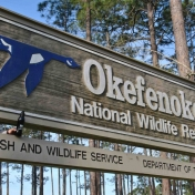 Okefenokee National Wildlife Refuge, Folkston, Georgia